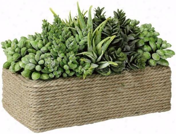 """succulents In Rectangular Coiled Rope Mug - 7.5""""hx5.5""""w, Green"""