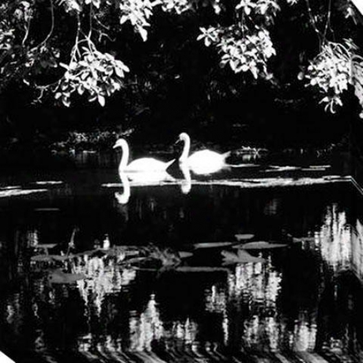 """swans Canvas Wall Art - 40""""hx40""""w, Black"""