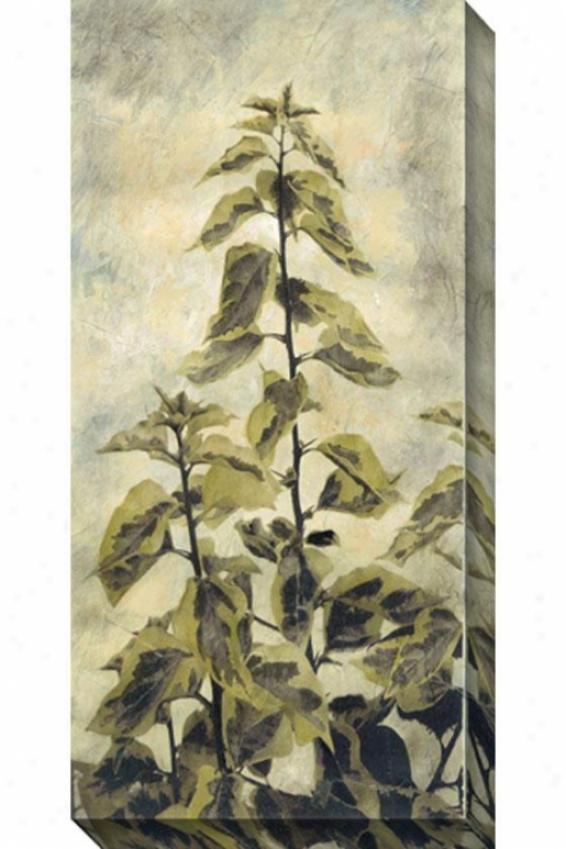 Upward Growtth Ii Canvas Wall Art - Ii, White