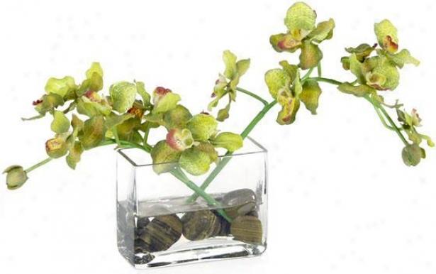 """""""vanda Orchid Floral Arranyement - 8""""""""hx5""""""""w, Green"""""""