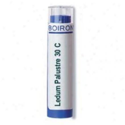 Boiron's Ledum Palustre30c