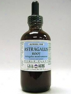 Gaia Herb's Astragalus Root Alcohol-free 4oz